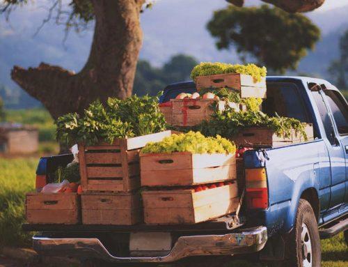 نکات بهداشتی که برای حمل و نقل مواد غذایی باید رعایت شوند