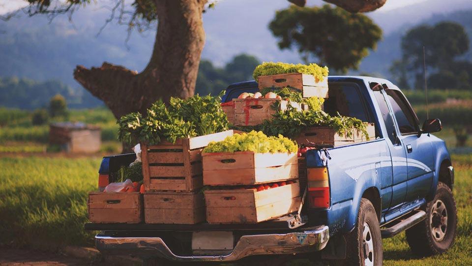نکات بهداشتی برای حمل و نقل مواد غذایی
